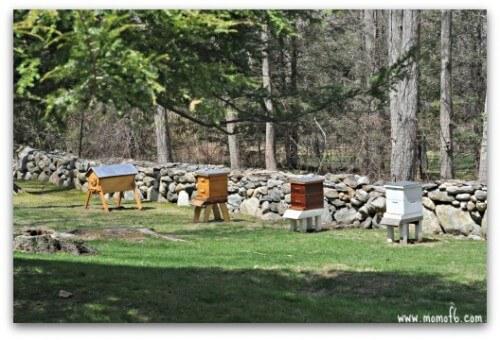 Backyard Garden-bees