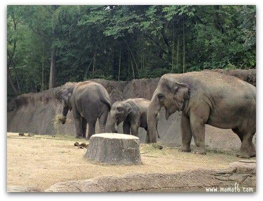 Zoo03