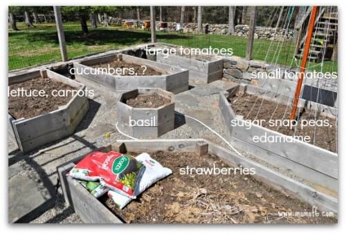 Backyard Vegetable Garden Plan