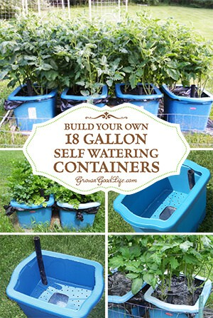 12 Tips on How to Grow a Vegetable Garden with Your Kids MomOf6